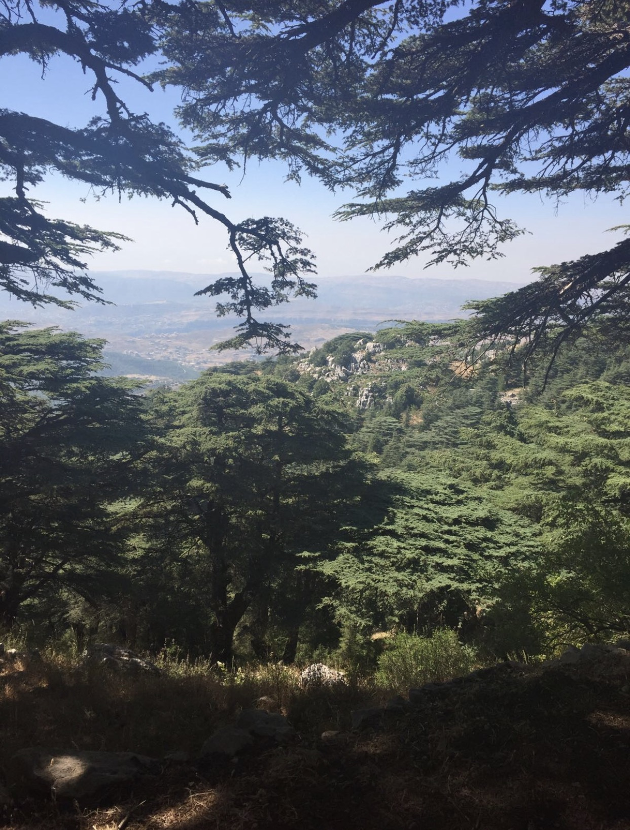 Lebanon,s great oak tree district - Year 2016